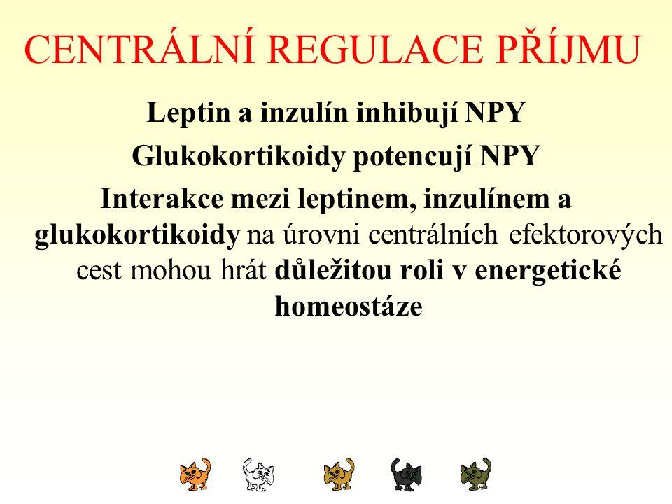 CENTRÁLNÍ REGULACE PŘÍJMU Leptin a inzulín inhibují NPY Glukokortikoidy potencují NPY Interakce mezi leptinem, inzulínem a glukokortikoidy na úrovni c