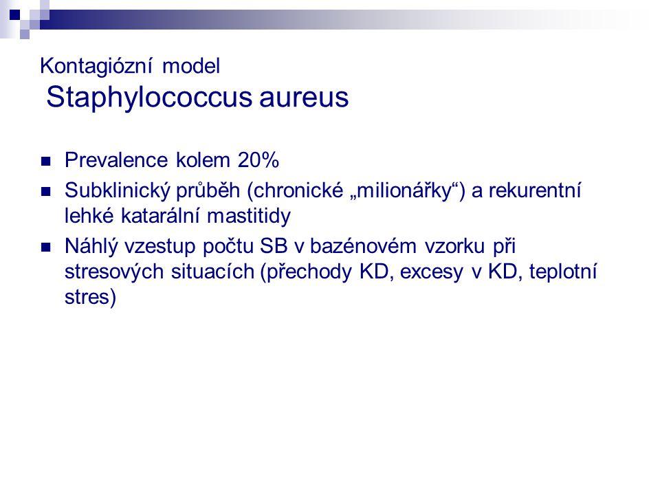 """Kontagiózní model Staphylococcus aureus Prevalence kolem 20% Subklinický průběh (chronické """"milionářky ) a rekurentní lehké katarální mastitidy Náhlý vzestup počtu SB v bazénovém vzorku při stresových situacích (přechody KD, excesy v KD, teplotní stres)"""