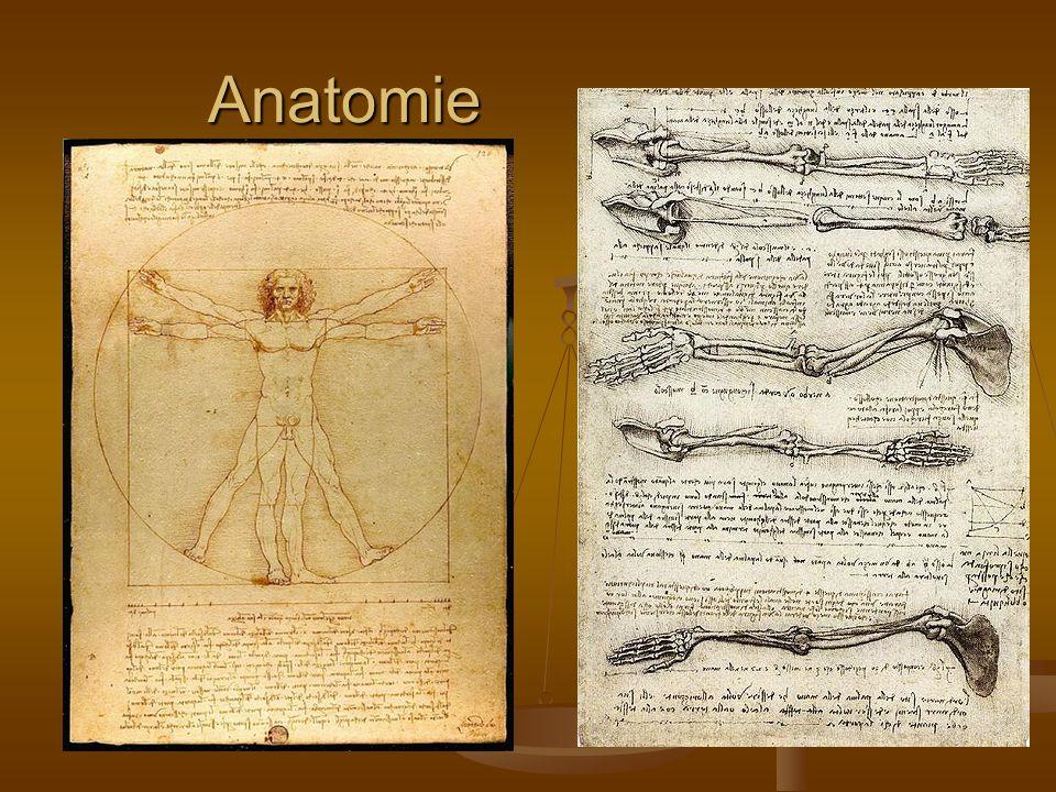 Anatomie Anatomie