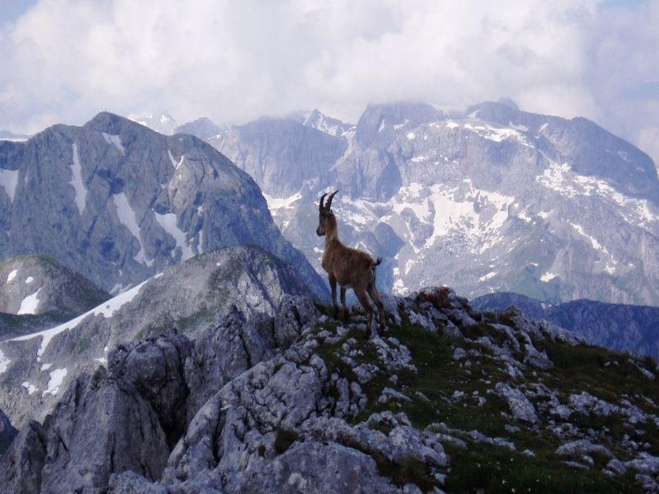 Salzbursko je rovněž světově proslulou a velmi navštěvovanou lyžařskou oblastí. Hned v několika jeho střediscích se jezdí světové poháry v alpských di