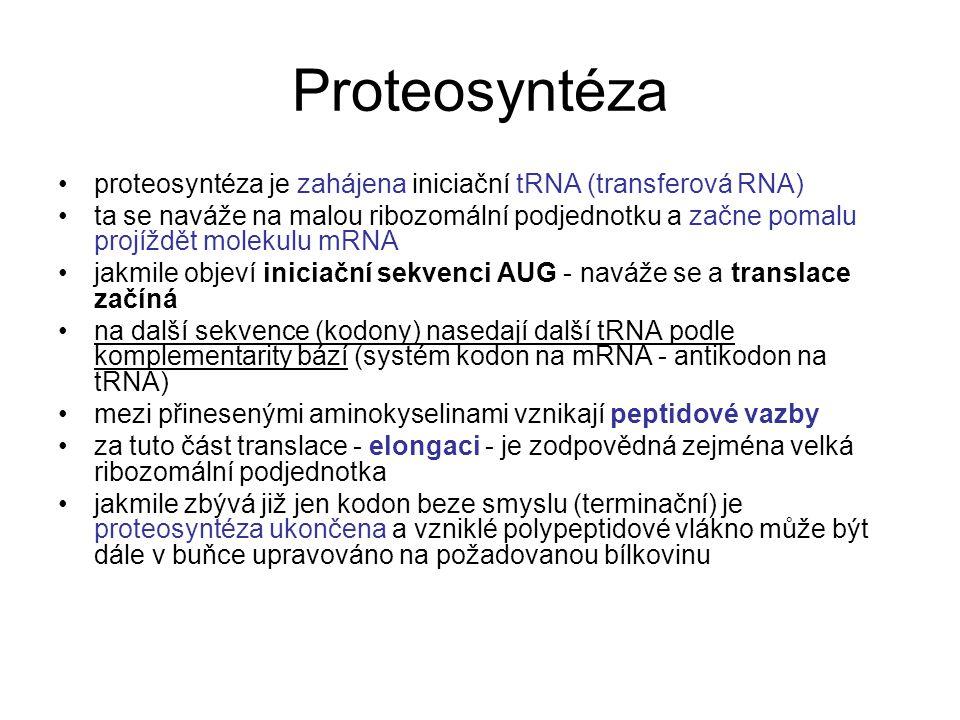 Proteosyntéza proteosyntéza je zahájena iniciační tRNA (transferová RNA) ta se naváže na malou ribozomální podjednotku a začne pomalu projíždět moleku