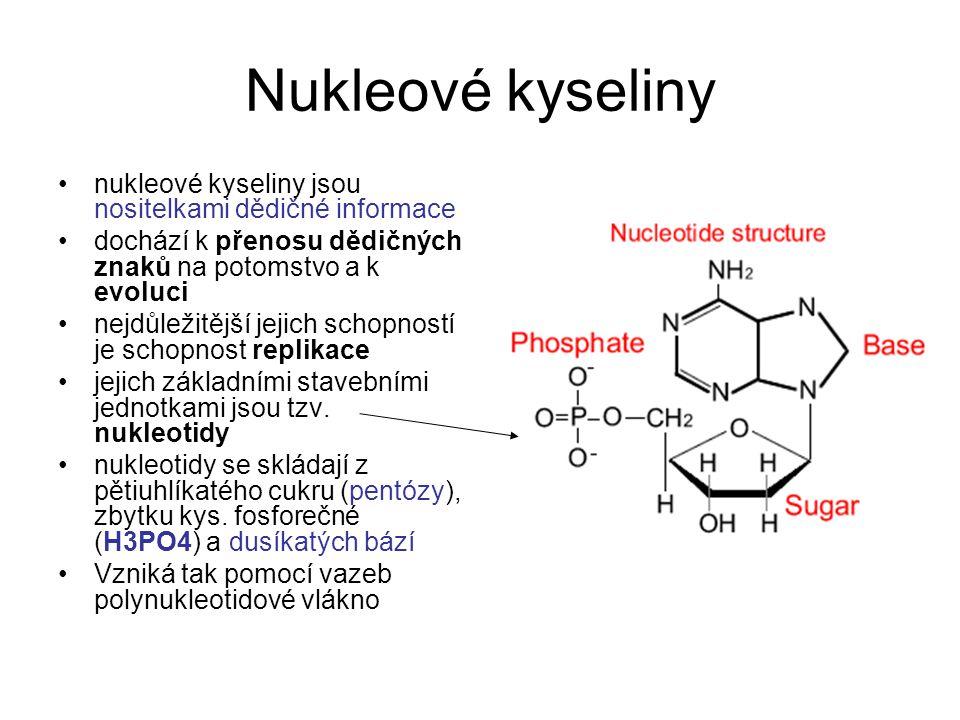 Nukleové kyseliny nukleové kyseliny jsou nositelkami dědičné informace dochází k přenosu dědičných znaků na potomstvo a k evoluci nejdůležitější jejic