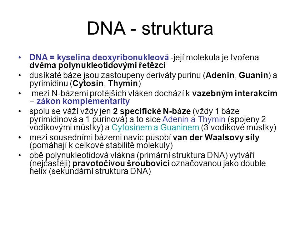 DNA - struktura DNA = kyselina deoxyribonukleová -její molekula je tvořena dvěma polynukleotidovými řetězci dusíkaté báze jsou zastoupeny deriváty pur