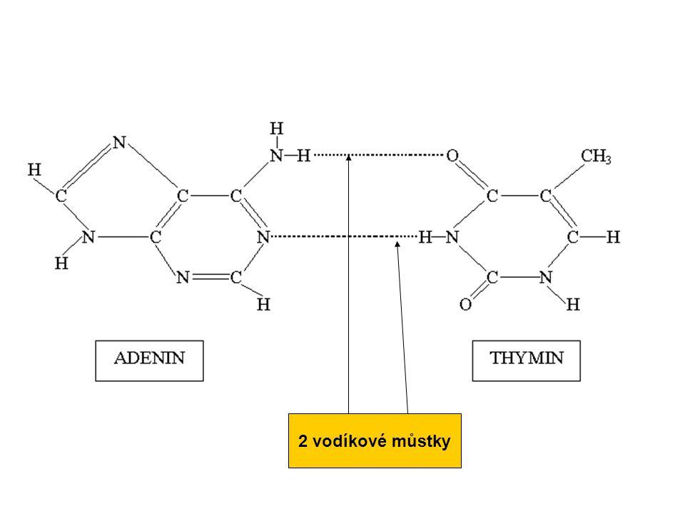 2 vodíkové můstky