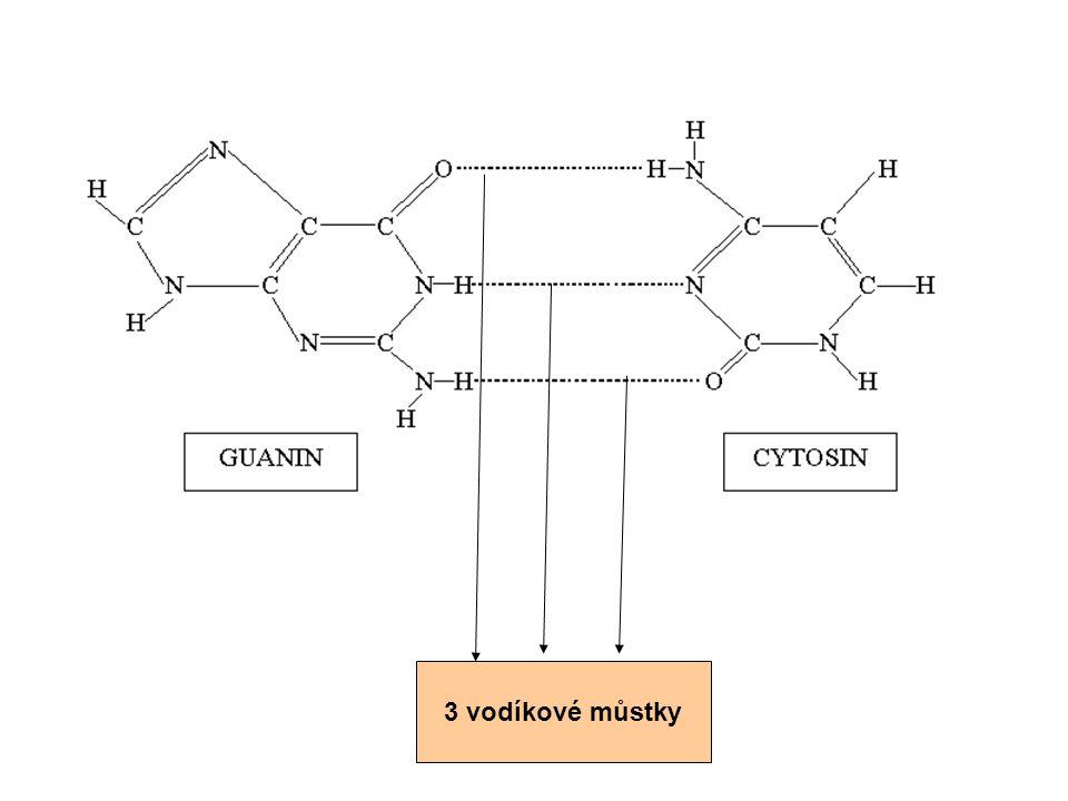 3 vodíkové můstky