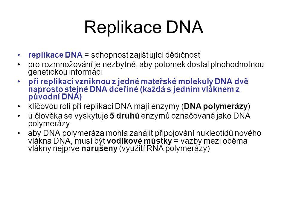 Replikace DNA replikace DNA = schopnost zajišťující dědičnost pro rozmnožování je nezbytné, aby potomek dostal plnohodnotnou genetickou informaci při