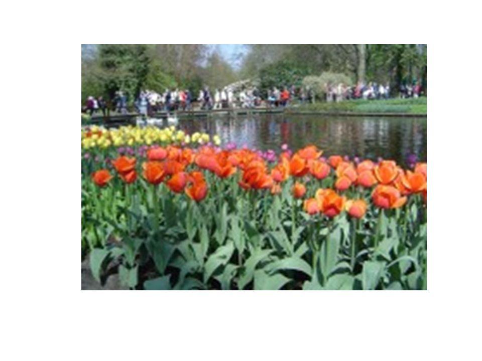 Park – Botanická zahrada Jeho základy byly položeny již v roce 1830, pro veřejnost byl otevřen v roce 1950.