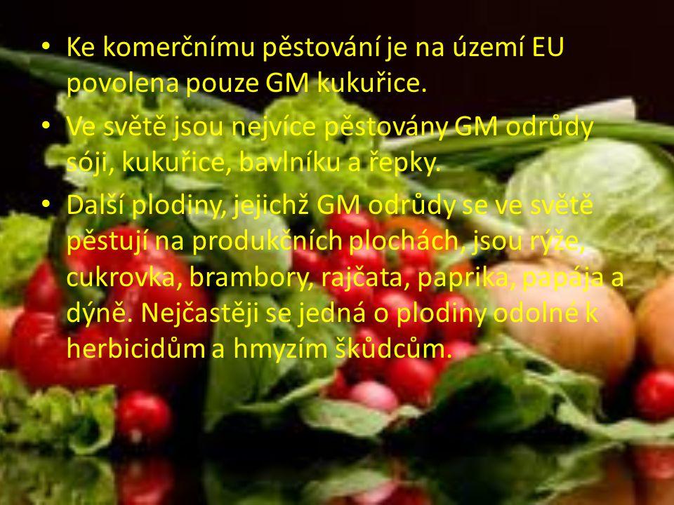 Ke komerčnímu pěstování je na území EU povolena pouze GM kukuřice.