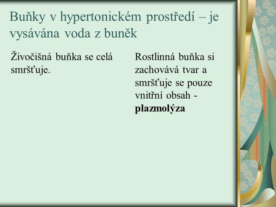 Buňky v hypertonickém prostředí – je vysávána voda z buněk Živočišná buňka se celá smršťuje.