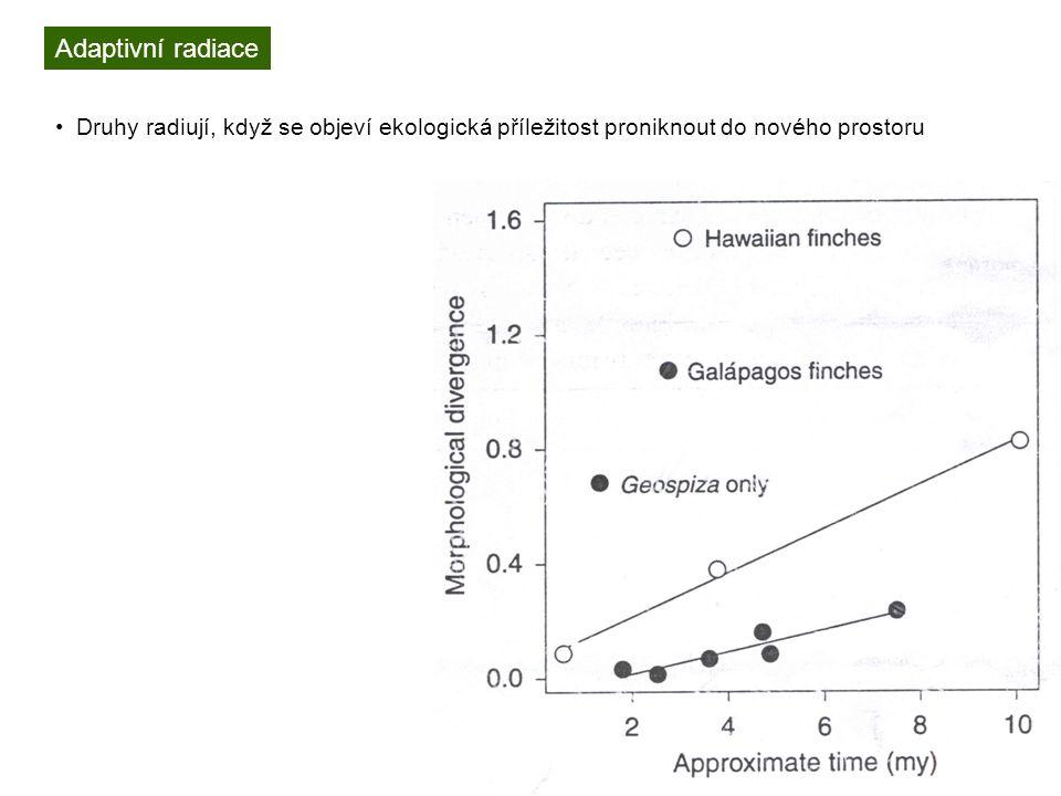 Adaptivní radiace Druhy radiují, když se objeví ekologická příležitost proniknout do nového prostoru