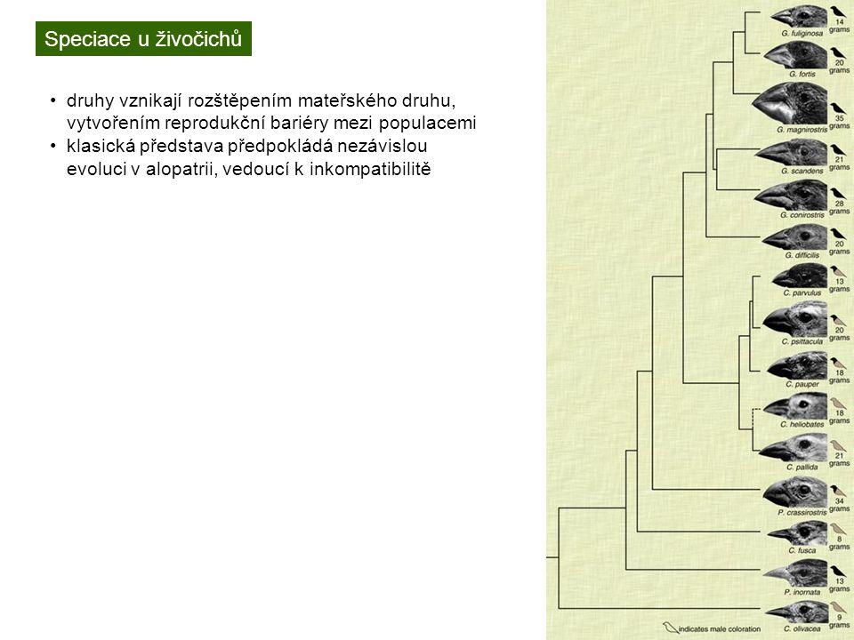 Speciace u živočichů druhy vznikají rozštěpením mateřského druhu, vytvořením reprodukční bariéry mezi populacemi klasická představa předpokládá nezávislou evoluci v alopatrii, vedoucí k inkompatibilitě často nejdříve jde o sterilitu (heterogametických) hybridů, nebo prezygotické mechanismy budníček zelený (Phylloscopus trochilloides)