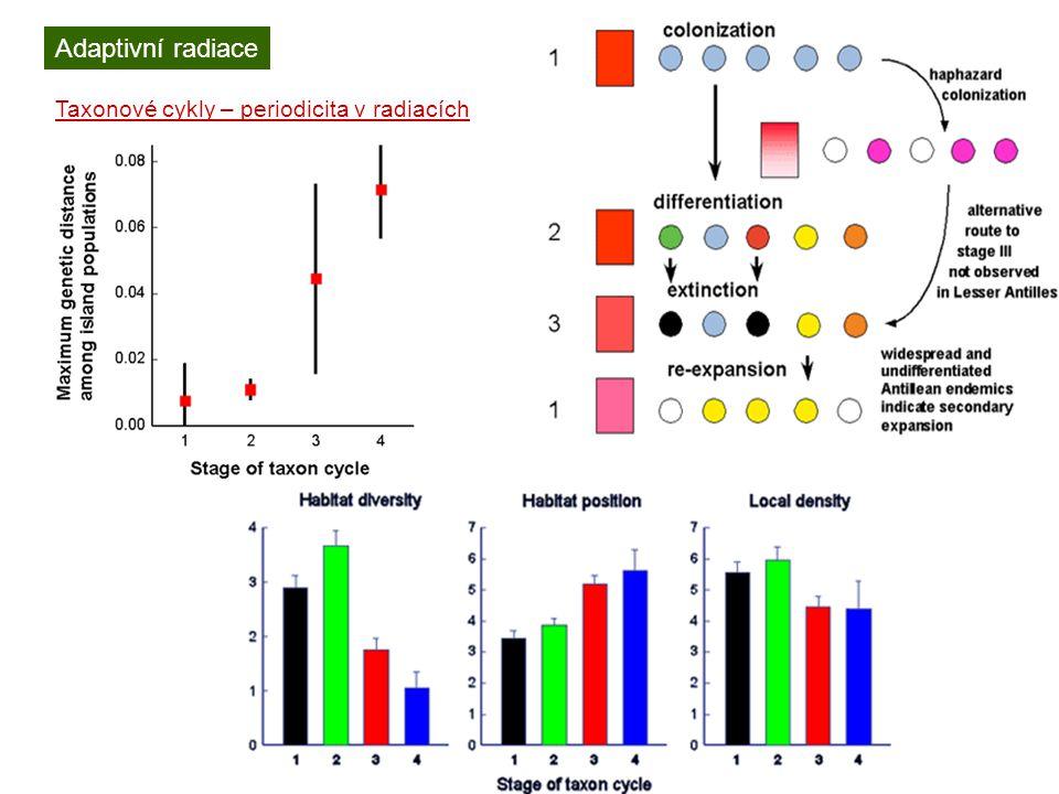 Adaptivní radiace Taxonové cykly – periodicita v radiacích