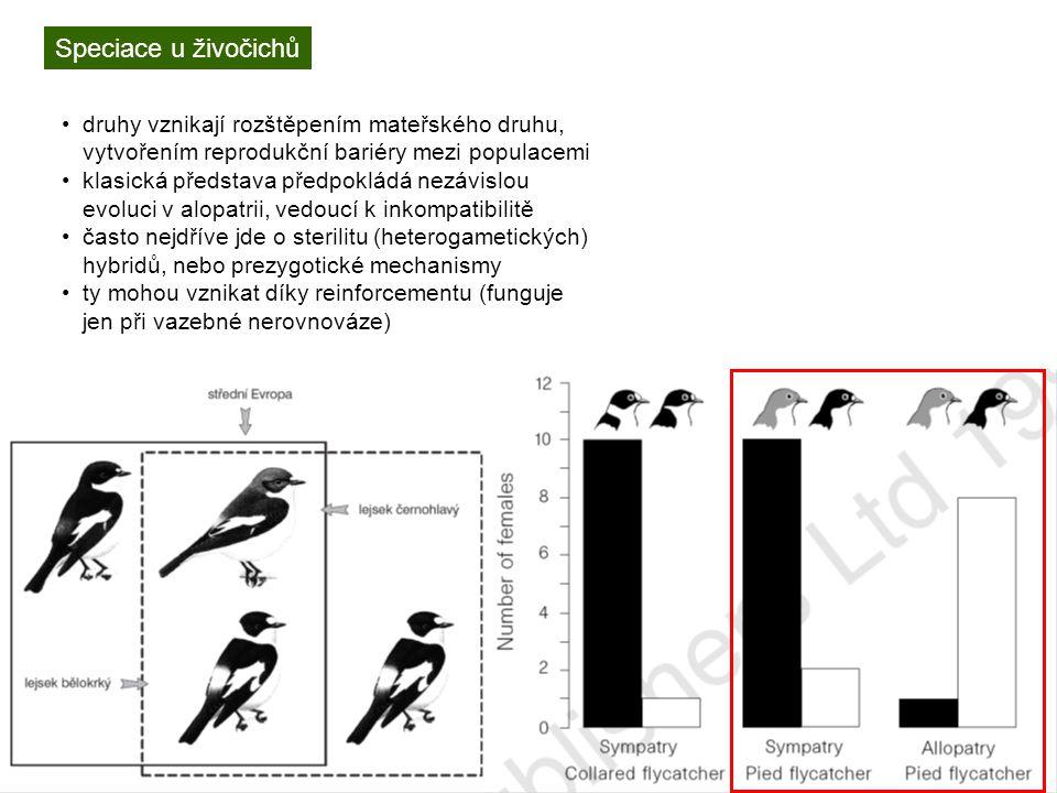 Speciace u živočichů druhy vznikají rozštěpením mateřského druhu, vytvořením reprodukční bariéry mezi populacemi klasická představa předpokládá nezávislou evoluci v alopatrii, vedoucí k inkompatibilitě často nejdříve jde o sterilitu (heterogametických) hybridů, nebo prezygotické mechanismy ty mohou vznikat díky reinforcementu (funguje jen při vazebné nerovnováze)