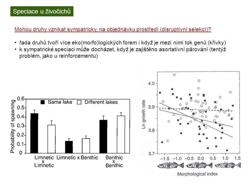 Speciace u živočichů Mohou druhy vznikat sympatricky, na objednávku prostředí (disruptivní selekcí).