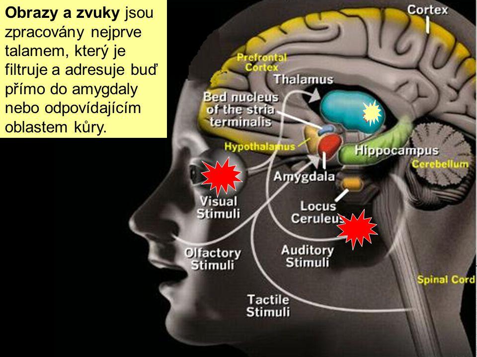 Když smysly zachytí hrozbu (ránu, výhrůžný pohled, hrůzný vjem), informace se mozkem šíří dvěma různými cestami (zde A, B) A-zkratka, horká linka do a