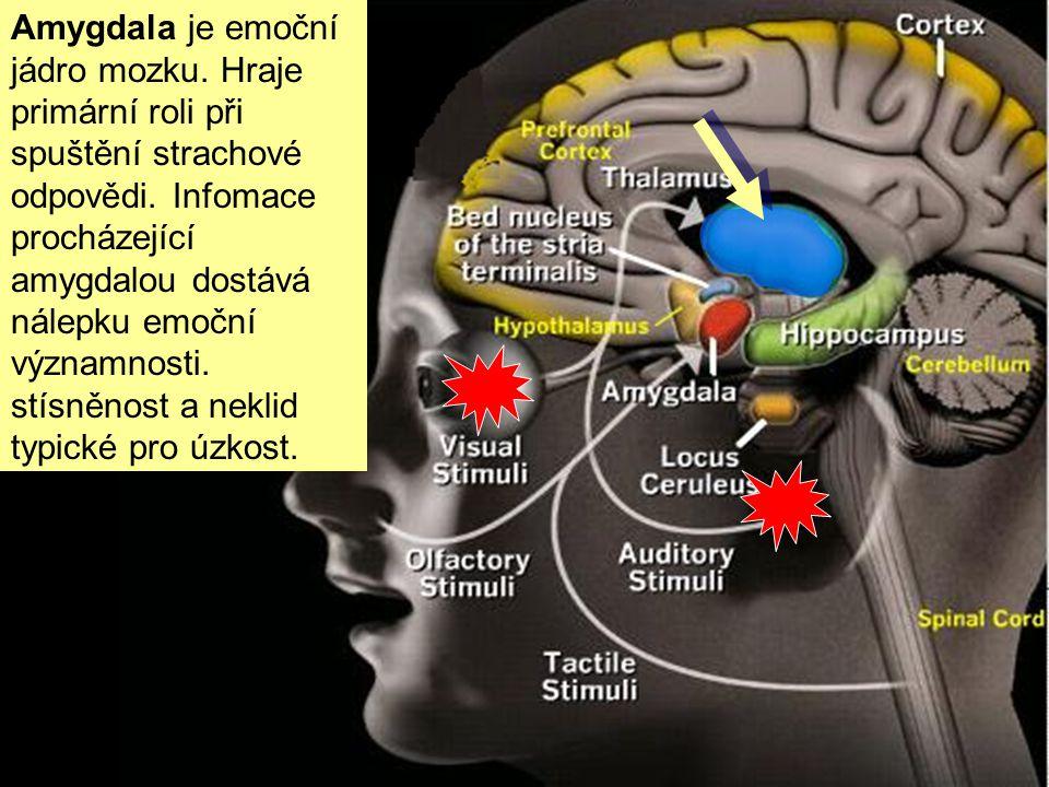 Pachy a dotyky talamus obcházejí a jdou zkratkou přímo do amygdaly. Pachy a bolest tak vyvolávají silnější vzpomínky či pocity než obrazy a zvuky