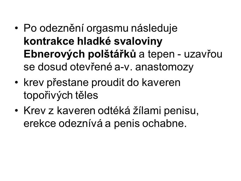 Šourek: (scrotum) kožní vak hruškovitého tvaru, umístěný za penisem pod symfýzou Ve střední rovině zřetelný šev (raphe scroti) Kůže – vrásčitá, tenká, silně pigmentovaná, obsahuje mazové a potní žlázy,řídce chlupy Podkožní vazivo (tunica dartos scroti) uvnitř rozděleno přepážkou (septum scroti) na dvě dutiny (cavum scroti) Uložené org.