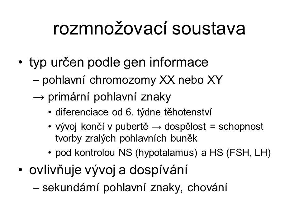 rozmnožovací soustava typ určen podle gen informace –pohlavní chromozomy XX nebo XY → primární pohlavní znaky diferenciace od 6. týdne těhotenství výv