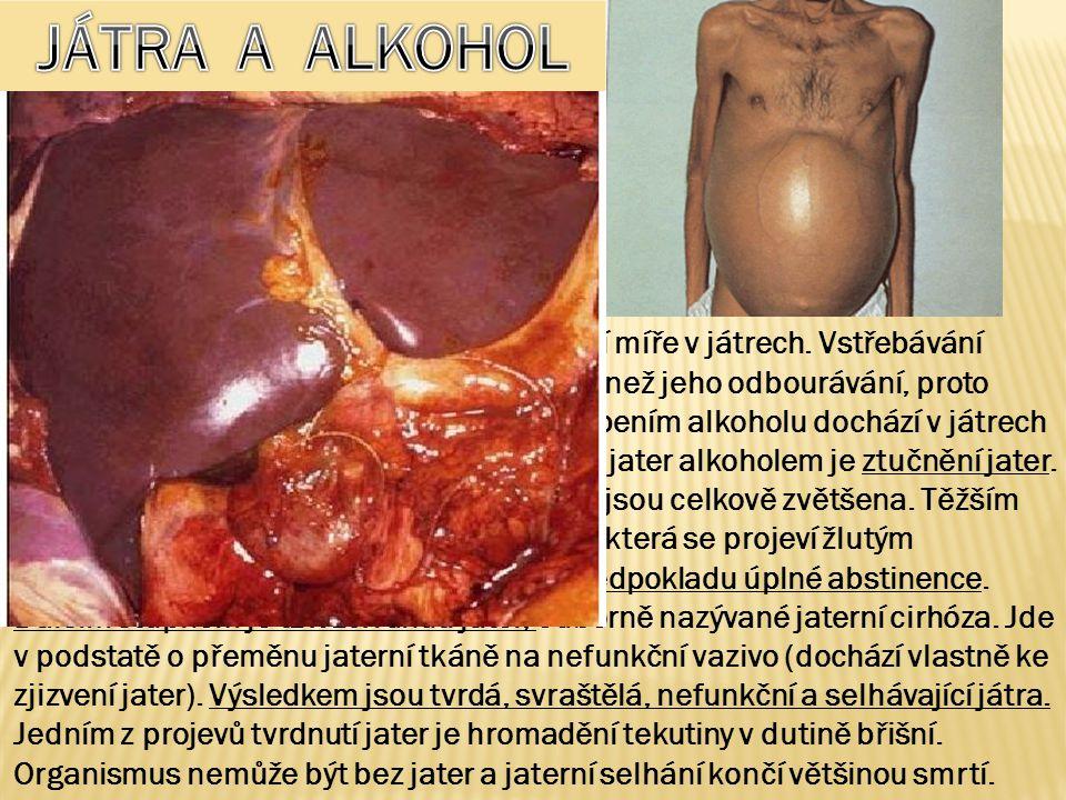 Odbourávání alkoholu probíhá v rozhodující míře v játrech. Vstřebávání alkoholu do krve je však mnohem rychlejší než jeho odbourávání, proto může lehc