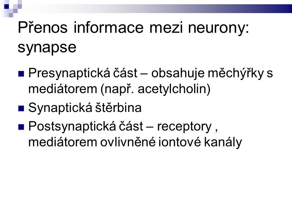 Přenos informace mezi neurony: synapse Presynaptická část – obsahuje měchýřky s mediátorem (např.