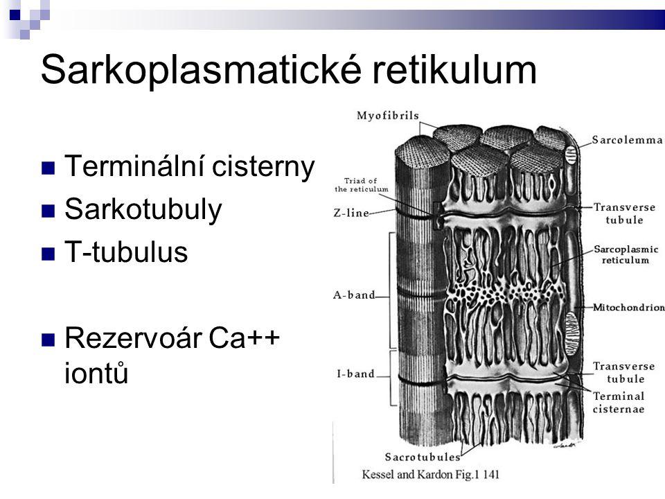 Sarkoplasmatické retikulum Terminální cisterny Sarkotubuly T-tubulus Rezervoár Ca++ iontů
