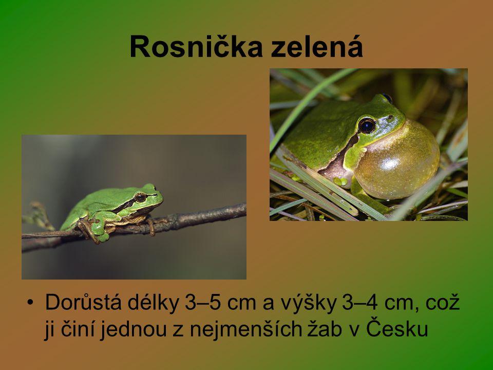 Rosnička zelená Dorůstá délky 3–5 cm a výšky 3–4 cm, což ji činí jednou z nejmenších žab v Česku