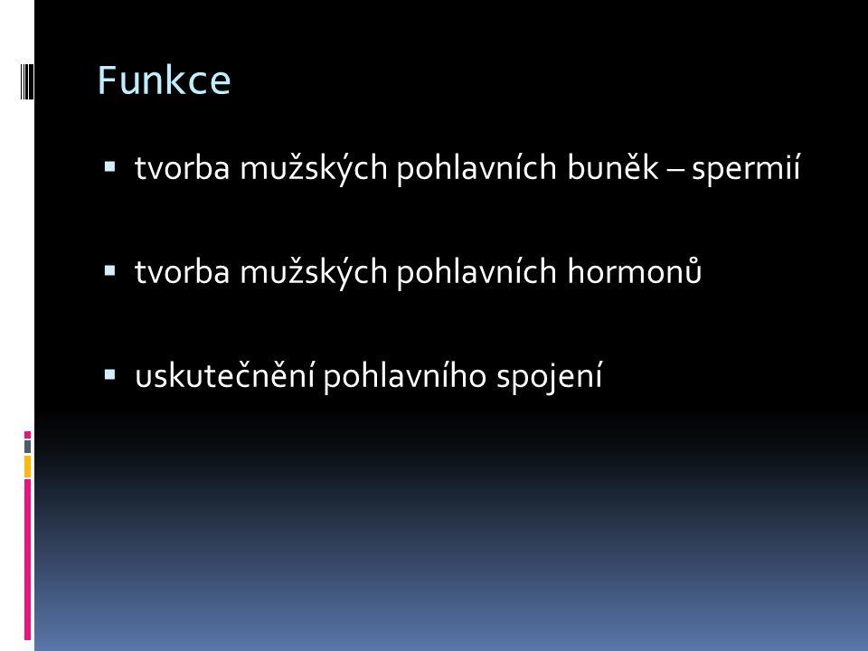 Varle - umístění do šourku  původně v břišní dutině, sestupuje do šourku  šourek  kožní váček, rozdělený na 2 asymetrické části  uložení varlat a nadvarlat mimo tělní dutinu  nutné ke zrání spermií – teplota o 4 °C nižší než v těle  reakce na teplotu, adrenalin