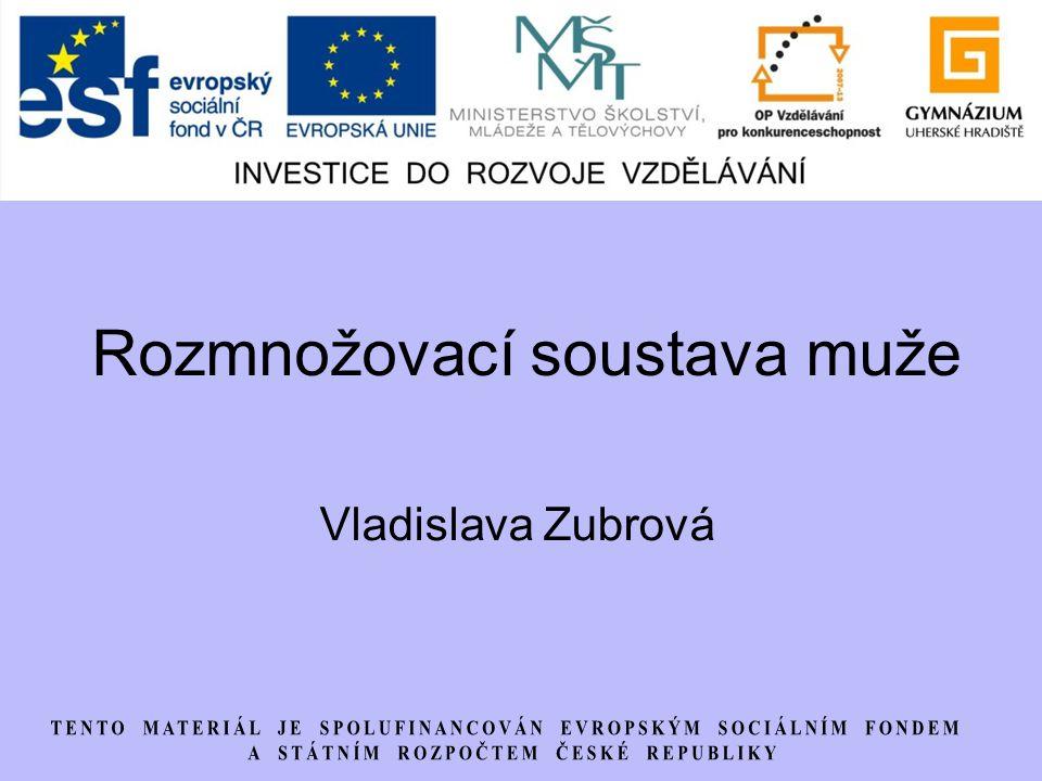 Rozmnožovací soustava muže Vladislava Zubrová