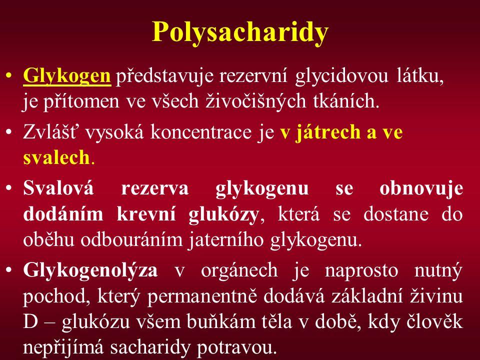 Polysacharidy Glykogen představuje rezervní glycidovou látku, je přítomen ve všech živočišných tkáních. Zvlášť vysoká koncentrace je v játrech a ve sv