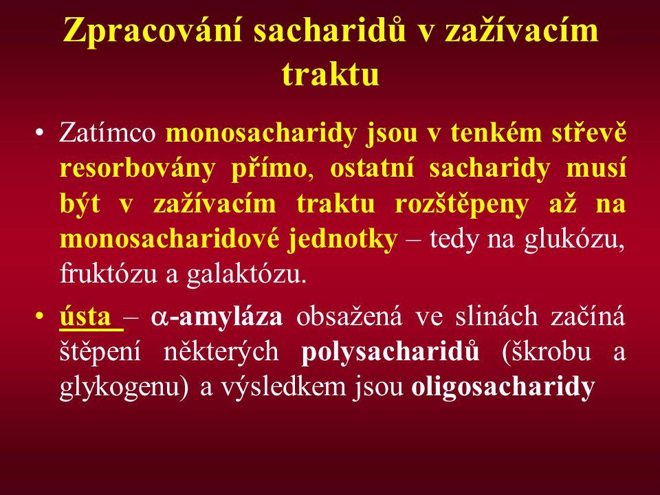 Zpracování sacharidů v zažívacím traktu Zatímco monosacharidy jsou v tenkém střevě resorbovány přímo, ostatní sacharidy musí být v zažívacím traktu ro
