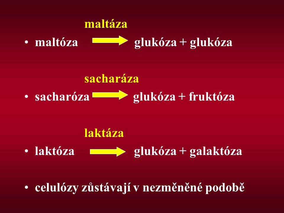maltáza maltóza glukóza + glukóza sacharáza sacharóza glukóza + fruktóza laktáza laktóza glukóza + galaktóza celulózy zůstávají v nezměněné podobě