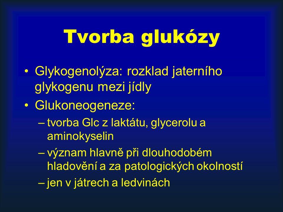 Tvorba glukózy Glykogenolýza: rozklad jaterního glykogenu mezi jídly Glukoneogeneze: –tvorba Glc z laktátu, glycerolu a aminokyselin –význam hlavně př
