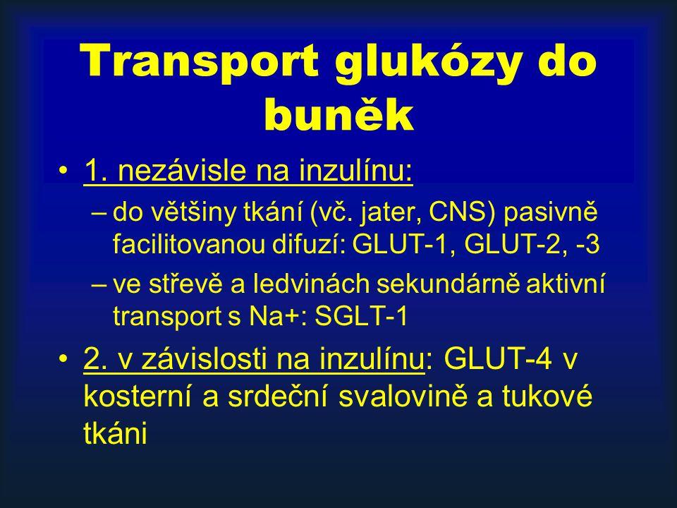 Transport glukózy do buněk 1. nezávisle na inzulínu: –do většiny tkání (vč. jater, CNS) pasivně facilitovanou difuzí: GLUT-1, GLUT-2, -3 –ve střevě a
