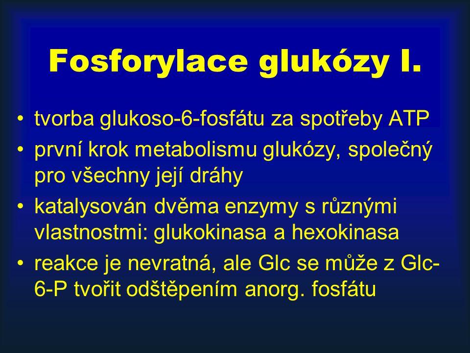 Fosforylace glukózy I. tvorba glukoso-6-fosfátu za spotřeby ATP první krok metabolismu glukózy, společný pro všechny její dráhy katalysován dvěma enzy