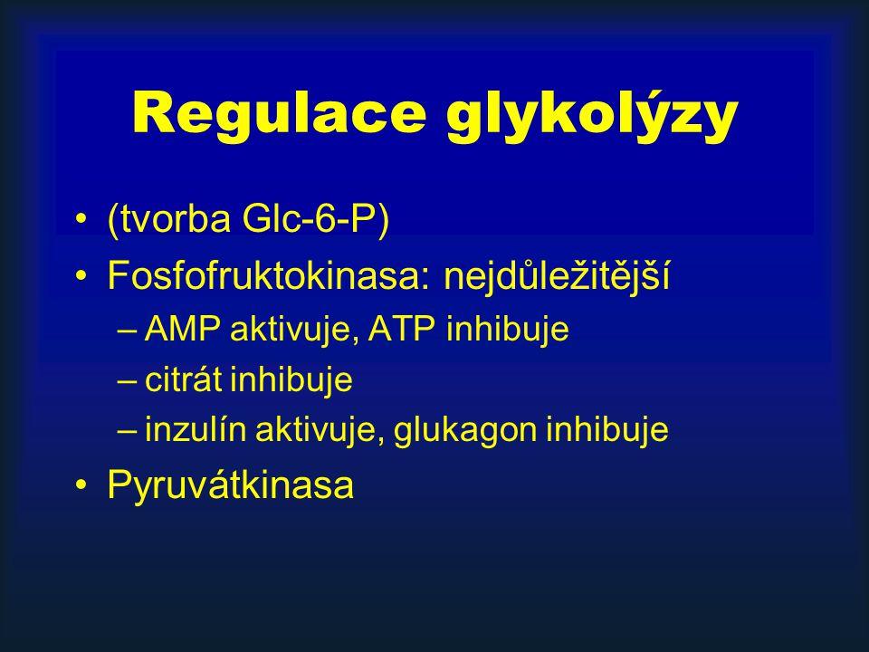 Regulace glykolýzy (tvorba Glc-6-P) Fosfofruktokinasa: nejdůležitější –AMP aktivuje, ATP inhibuje –citrát inhibuje –inzulín aktivuje, glukagon inhibuj