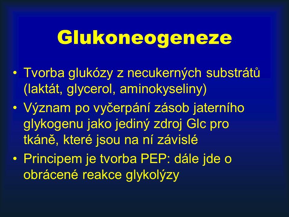 Glukoneogeneze Tvorba glukózy z necukerných substrátů (laktát, glycerol, aminokyseliny) Význam po vyčerpání zásob jaterního glykogenu jako jediný zdro