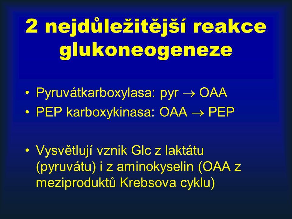 2 nejdůležitější reakce glukoneogeneze Pyruvátkarboxylasa: pyr  OAA PEP karboxykinasa: OAA  PEP Vysvětlují vznik Glc z laktátu (pyruvátu) i z aminok