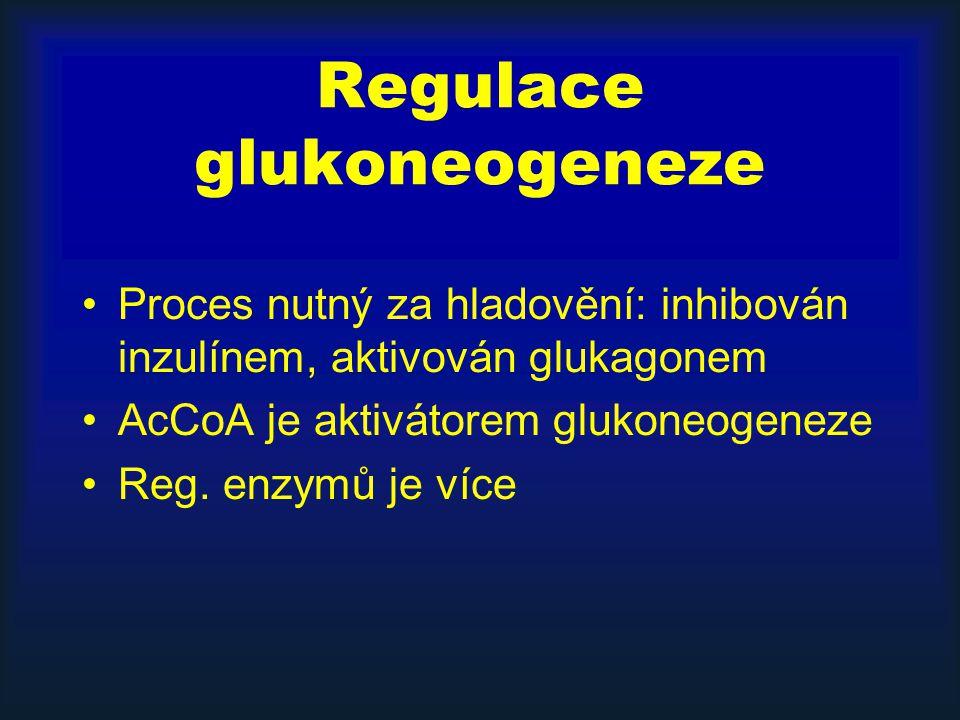 Regulace glukoneogeneze Proces nutný za hladovění: inhibován inzulínem, aktivován glukagonem AcCoA je aktivátorem glukoneogeneze Reg. enzymů je více