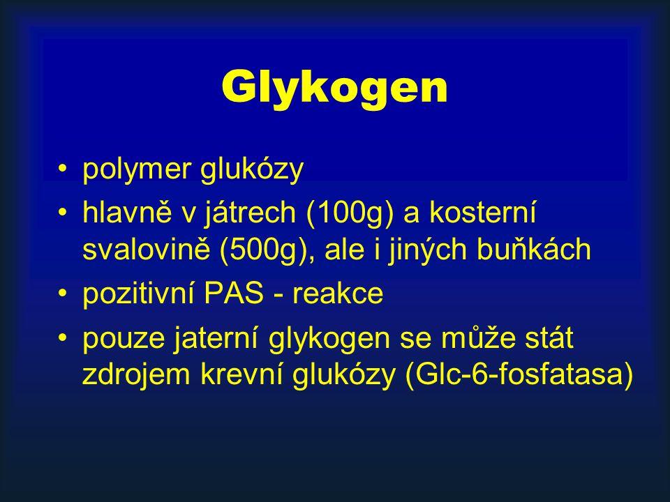 Glykogen polymer glukózy hlavně v játrech (100g) a kosterní svalovině (500g), ale i jiných buňkách pozitivní PAS - reakce pouze jaterní glykogen se mů
