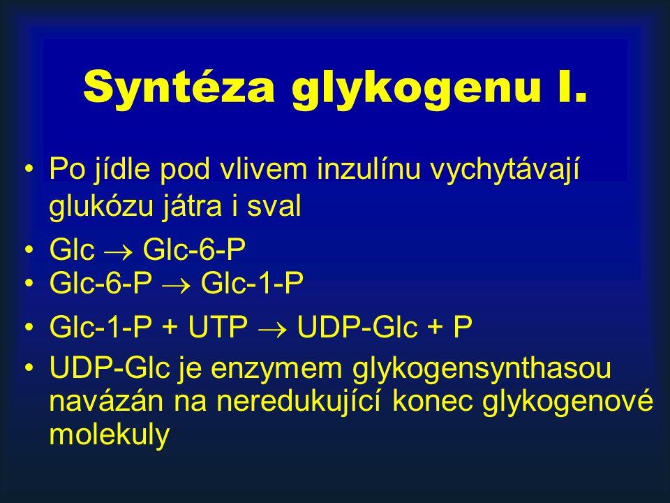 Syntéza glykogenu I. Po jídle pod vlivem inzulínu vychytávají glukózu játra i sval Glc  Glc-6-P Glc-6-P  Glc-1-P Glc-1-P + UTP  UDP-Glc + P UDP-Glc