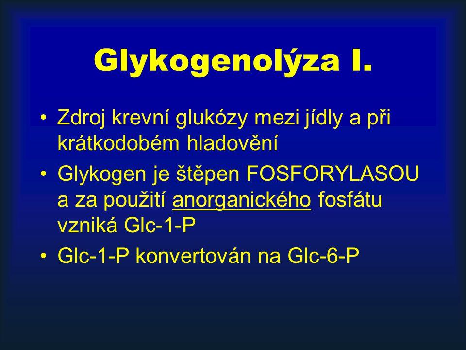 Glykogenolýza I. Zdroj krevní glukózy mezi jídly a při krátkodobém hladovění Glykogen je štěpen FOSFORYLASOU a za použití anorganického fosfátu vzniká