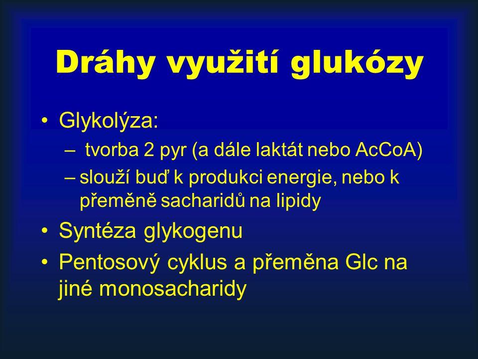 Dráhy využití glukózy Glykolýza: – tvorba 2 pyr (a dále laktát nebo AcCoA) –slouží buď k produkci energie, nebo k přeměně sacharidů na lipidy Syntéza