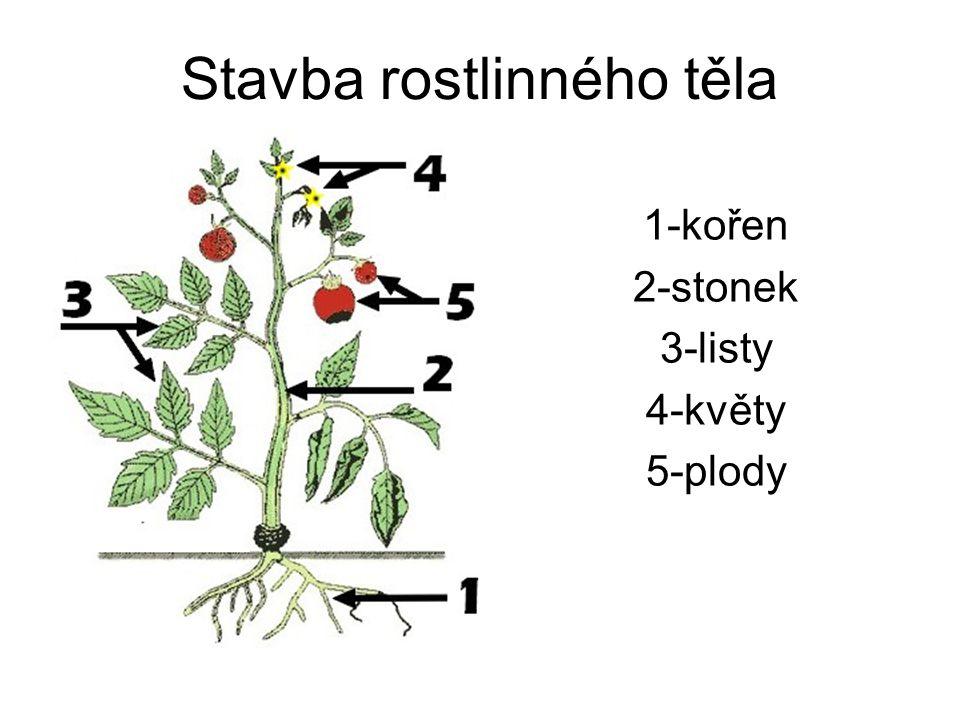 Stavba rostlinného těla 1-kořen 2-stonek 3-listy 4-květy 5-plody