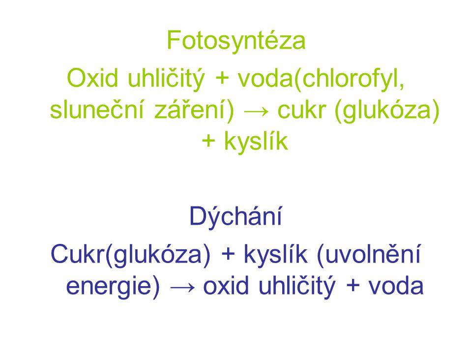 Fotosyntéza Oxid uhličitý + voda(chlorofyl, sluneční záření) → cukr (glukóza) + kyslík Dýchání Cukr(glukóza) + kyslík (uvolnění energie) → oxid uhliči