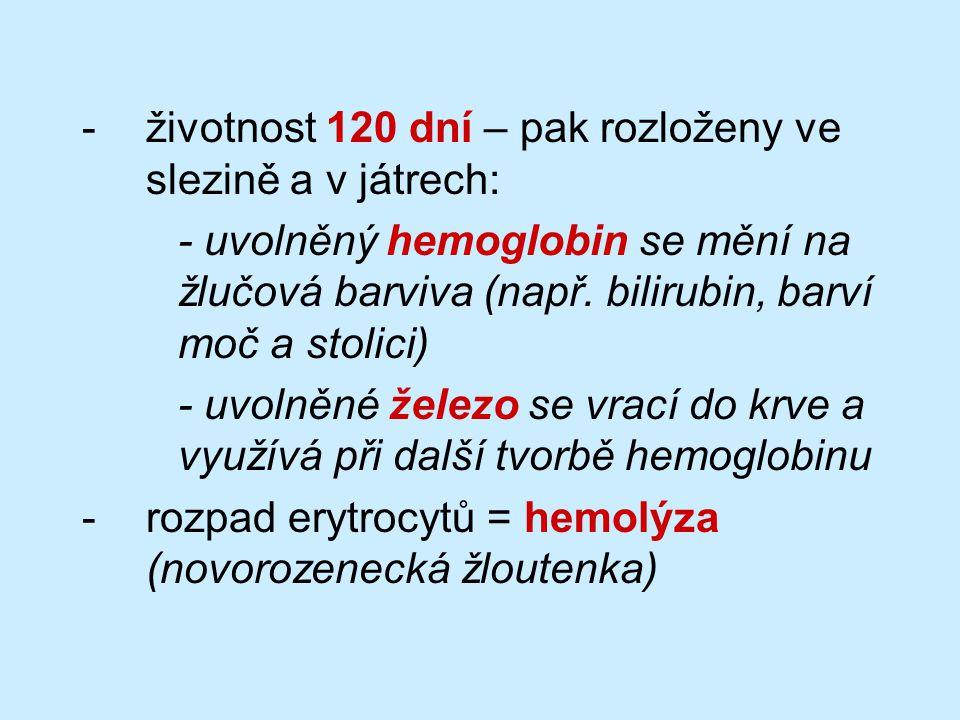 -životnost 120 dní – pak rozloženy ve slezině a v játrech: - uvolněný hemoglobin se mění na žlučová barviva (např.