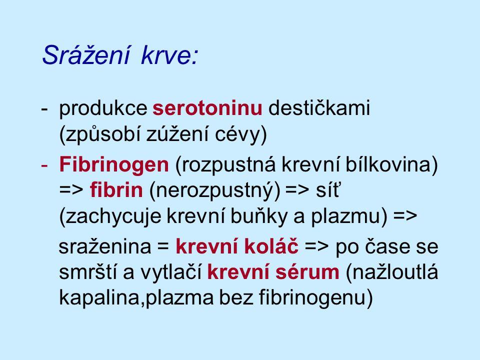 Srážení krve: -produkce serotoninu destičkami (způsobí zúžení cévy) -Fibrinogen (rozpustná krevní bílkovina) => fibrin (nerozpustný) => síť (zachycuje krevní buňky a plazmu) => sraženina = krevní koláč => po čase se smrští a vytlačí krevní sérum (nažloutlá kapalina,plazma bez fibrinogenu)