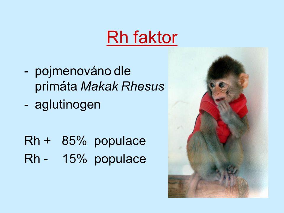 Rh faktor -pojmenováno dle primáta Makak Rhesus -aglutinogen Rh + 85% populace Rh - 15% populace