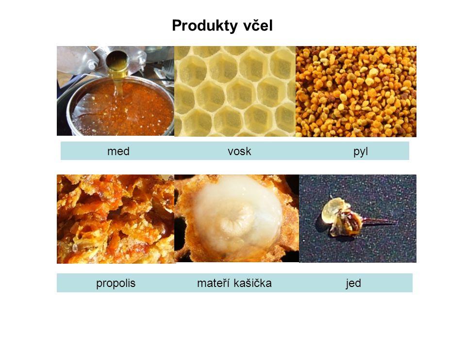 Produkty včel med vosk pyl propolismateří kašičkajed