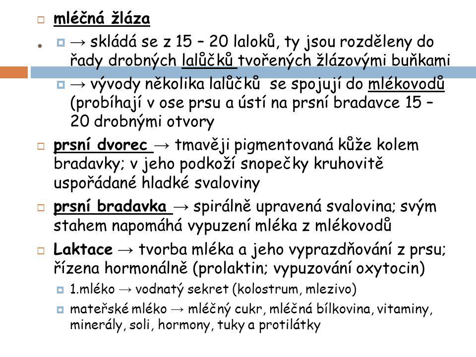 .  mléčná žláza  → skládá se z 15 – 20 laloků, ty jsou rozděleny do řady drobných lalůčků tvořených žlázovými buňkami  → vývody několika lalůčků se spojují do mlékovodů (probíhají v ose prsu a ústí na prsní bradavce 15 – 20 drobnými otvory  prsní dvorec → tmavěji pigmentovaná kůže kolem bradavky; v jeho podkoží snopečky kruhovitě uspořádané hladké svaloviny  prsní bradavka → spirálně upravená svalovina; svým stahem napomáhá vypuzení mléka z mlékovodů  Laktace → tvorba mléka a jeho vyprazdňování z prsu; řízena hormonálně (prolaktin; vypuzování oxytocin)  1.mléko → vodnatý sekret (kolostrum, mlezivo)  mateřské mléko → mléčný cukr, mléčná bílkovina, vitaminy, minerály, soli, hormony, tuky a protilátky