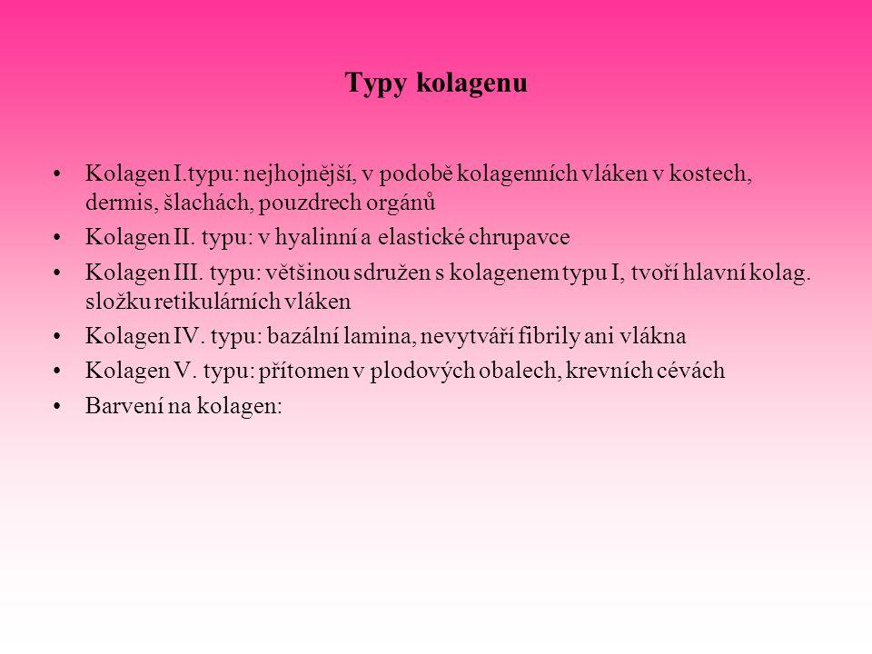 Typy kolagenu Kolagen I.typu: nejhojnější, v podobě kolagenních vláken v kostech, dermis, šlachách, pouzdrech orgánů Kolagen II. typu: v hyalinní a el